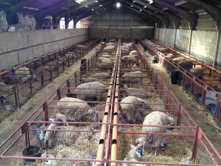 Livestock and lambing camera